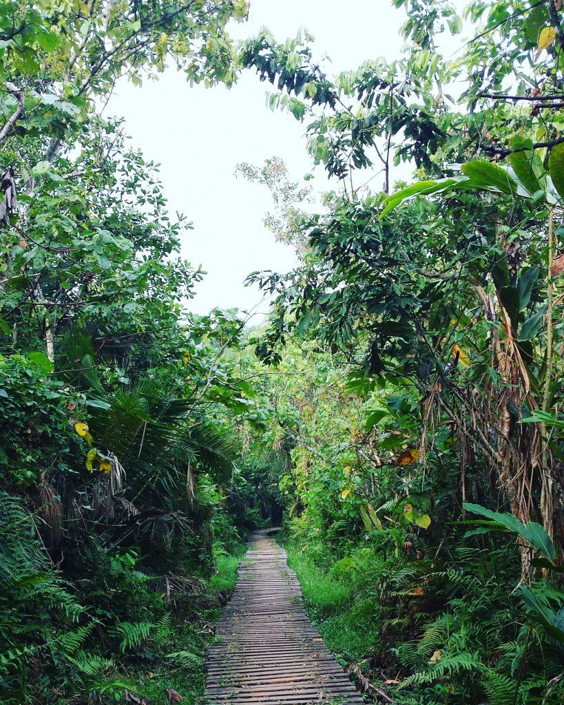 diana guide jungle
