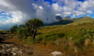Trekking in Malawi's Mulanje Mountains