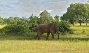 On safari in Zambia
