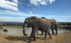 On safari in the Addo Elephant National Park